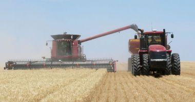 România a ocupat locul şase în UE la producţia de grâu