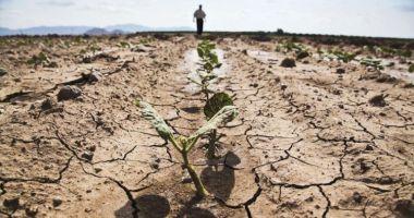 Culturile agricole din județul Constanța sunt cele mai afectate de secetă
