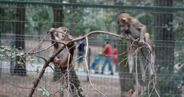 """Proiectul de lege prin care se permitea sacrificarea animalelor """"în surplus"""" de la zoo a fost retras"""